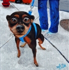 """City Sidewalk Dog""  Acrylics on Canvas  10""H x 10""W x 1.5""D"